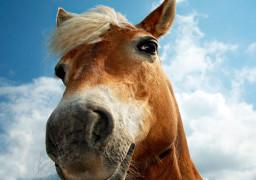 Запрягли, як коня! – представник громадськості про мера