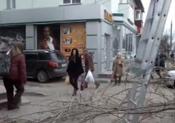 «Проходьте, бо буде падать» – біля ЦДЮТ обрізають дерева