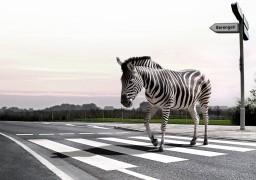 З черкаських доріг зникли «зебри»