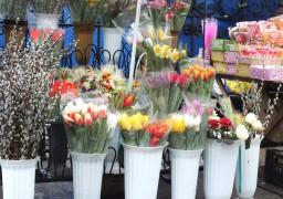 Святковий ярмарок квітів у Черкасах