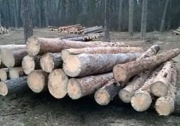 У Соснівці вирубують ліс