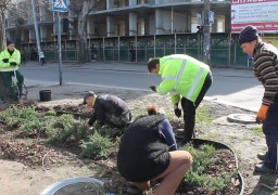На бул. Шевченка вкрали ялівці