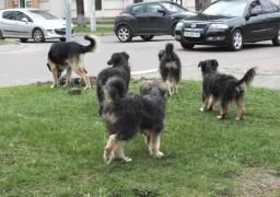 Черкасами бігають зграї собак