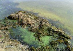 Черкаські пляжі рятують від смердючих водоростей