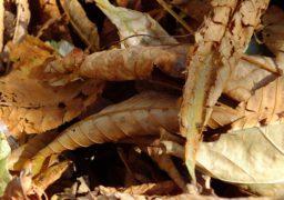 До Черкас завітала осінь