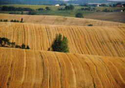 Батьківщинівець проти хаотичного продажу землі в Україні