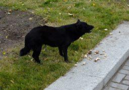 У Черкасах знову труять собак