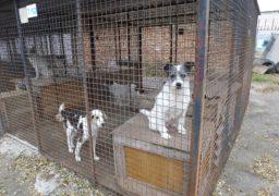 Собаки у черкаському притулку потребують допомоги
