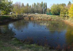 Осіння ідилія на штучному водоймищі