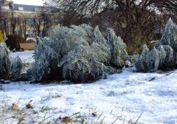На Різдво у Черкасах очікують сильні морози