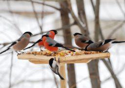 Черкащан закликають підгодувати птахів