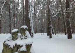«Сосновий бір» перетворився на зимову казку