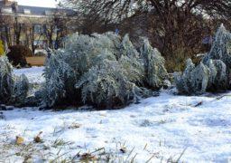 Черкащину знову накриє снігом