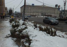 Біля Черкаської міськради здійснили розправу над ялівцями