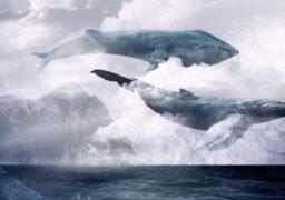 «Синій кит»: гра, яка забирає життя підлітків