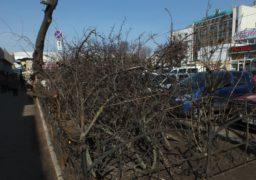 Біля Центрального ринку обрізали дерева
