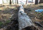 На розі вулиць Можайського та Лісова Просіка розпочате незаконне будівництво
