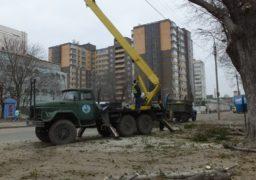 Комунальники у середмісті приводять до ладу дерева та проводять боротьбу з омелою