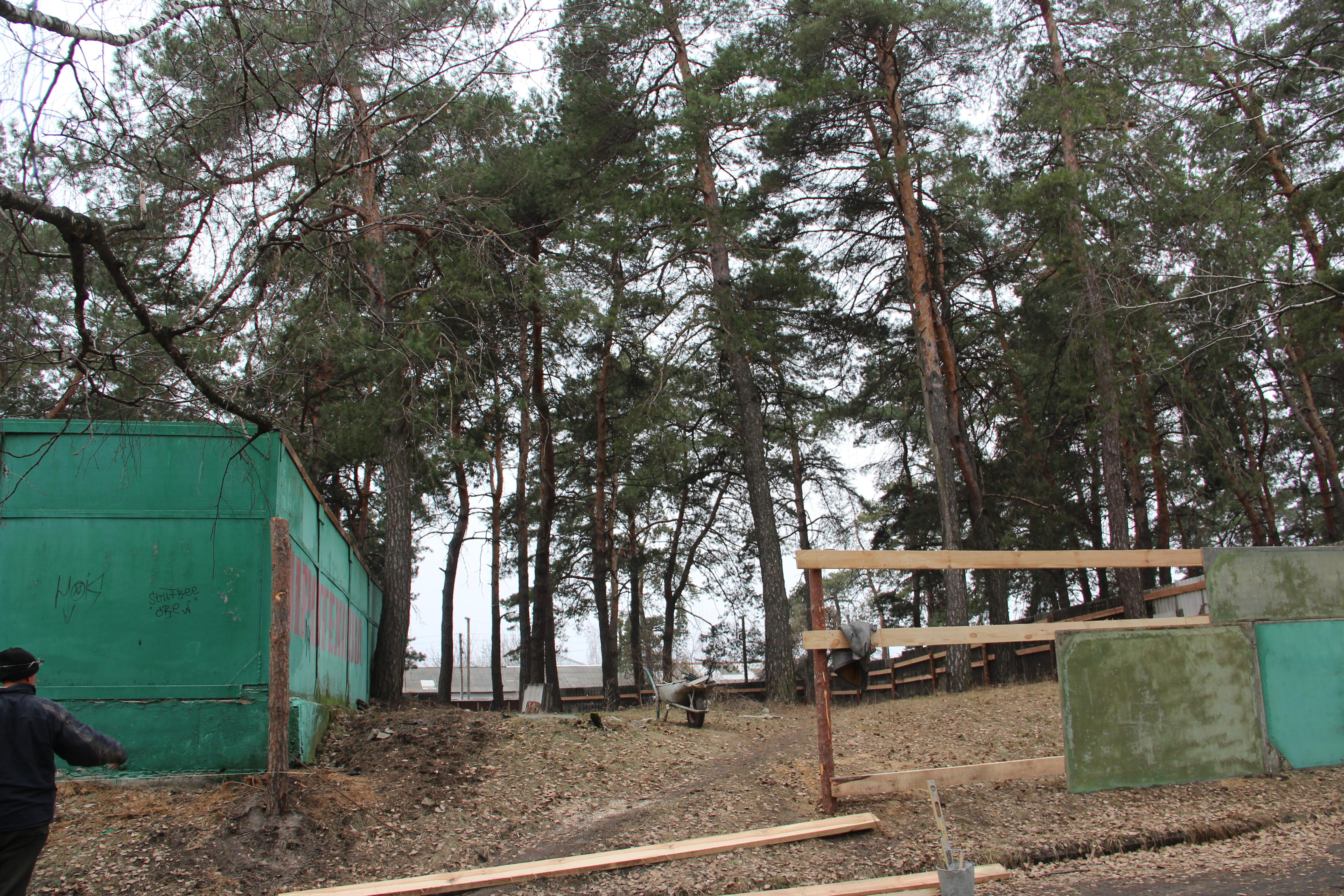 В Черкасах знов нищать ліс