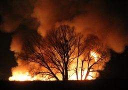 Пожежа в Липівському орнітологічному заказнику знищила десятки га зелених насаджень