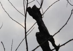 У Липівському заказнику вигоріли десятки гектарів заповідних плавнів та багаторічних зелених насаджень