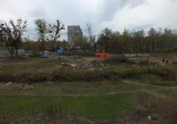 По вулиці Одеській відбувається масова вирубка дерев