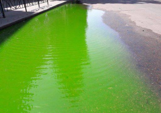 У середмісті Черкас утворилась калюжа яскраво зеленого кольору