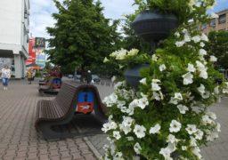 Середмістя Черкас прикрасили квітниками