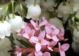 У Черкасах в букетах конвалій продають червонокнижні рослини