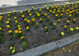 У Черкасах крадуть рослини, куплені міським коштом