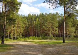 У черкащан хочуть забрати лісовий масив