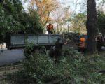 У центрі Черкас впало дерево і пошкодило лінії електропередач