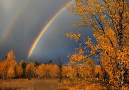 Цього тижня на Черкащині очікується похолодання та дощі