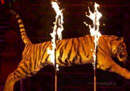 Громадські активісти закликають міську владу заборонити виступ пересувного цирку у Черкасах