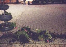 Біля Черкаського міськвиконкому вандали понівечили клумби