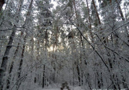 На Черкащині 18 грудня через снігопади оголошено штормове попередження