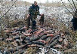 У Черкасах порушники правил рибальства заховали товстолоба в очереті. Рибу виявили патрульні