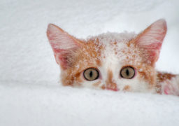 В Україні очікуються сильні снігопади з 18 січня