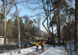 Біля Черкаської обласної лікарні виконують аварійну обрізку дерев