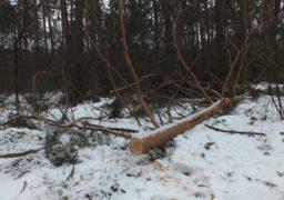 Негода спричинила стихійний лісоповал у Черкаському районі