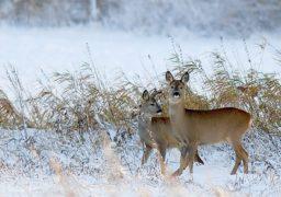 Єгері Смілянського лісгоспу підгодовують диких тварин