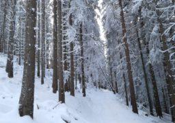 Зимова погода утримається щонайменше до 6 березня – гідрометцентр