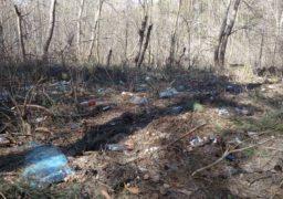 Черкаські ліси потерпають від горе-відпочивальників