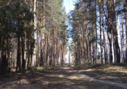 Екологічна комісія: хто і чому знищує дерева у черкаських лісах