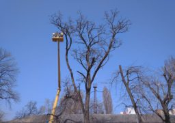 Біля черкаської Станції швидкої допомоги обрізають аварійні дерева