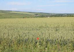 В Городищенському районі процвітають афери з аграрною землею