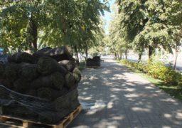 У центрі Черкас озеленюють бульвар Шевченка