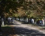 На черкаському бульварі настала передчасна осінь