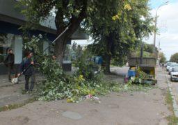 У центрі Черкас здійснюють обрізку дерев