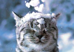 12 грудня у Черкаській та сусідніх областях сильний сніг